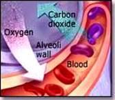 anglies dioksidas kraujo hipertenzijoje spazmalgono hipertenzija